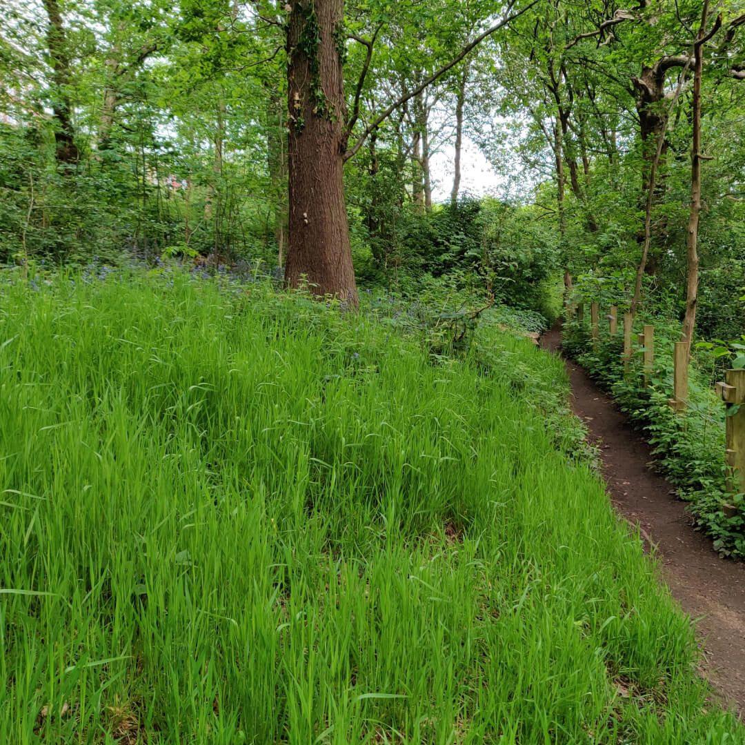 Woodhouse Ridge grass and path