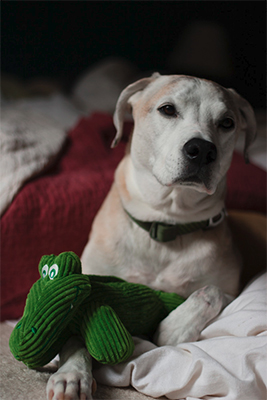 Our dog Bandit with one of his favorite toys