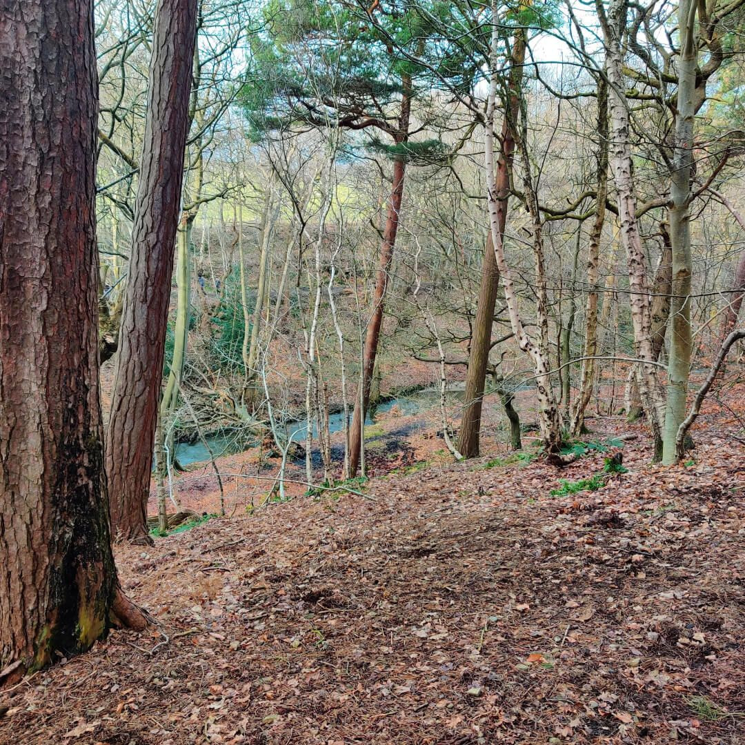 The hill in Scotland Wood looking down to Meanwood Beck