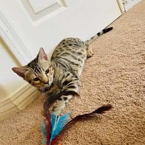 World champion feather hunter