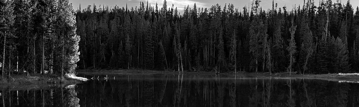 Real Estate Board Governance Principals Yellowstone lake