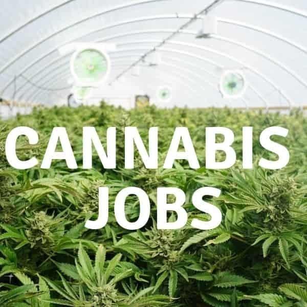 Cannabis Jobs in Australia