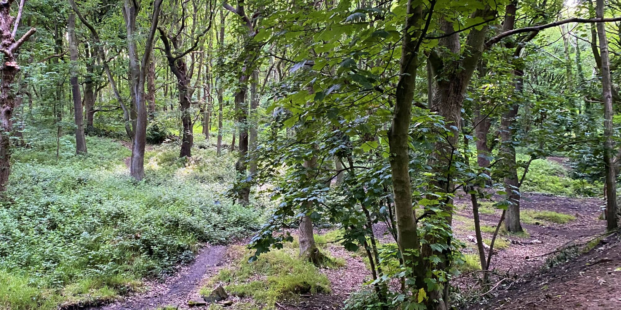 Bramley Fall Woods dense woodland