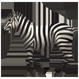 zebrasounds