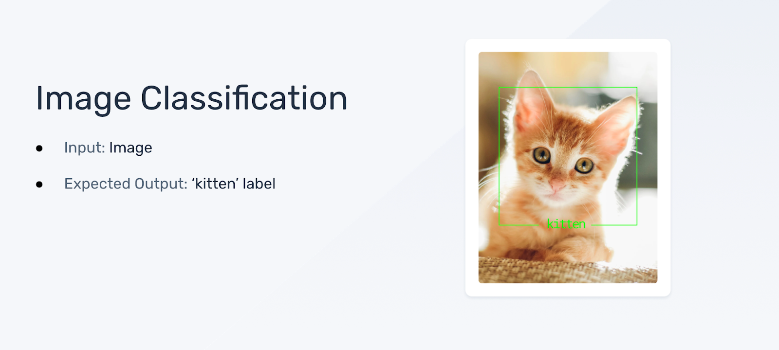 An image of a kitten as the input, and the label 'kitten' as the expected output.