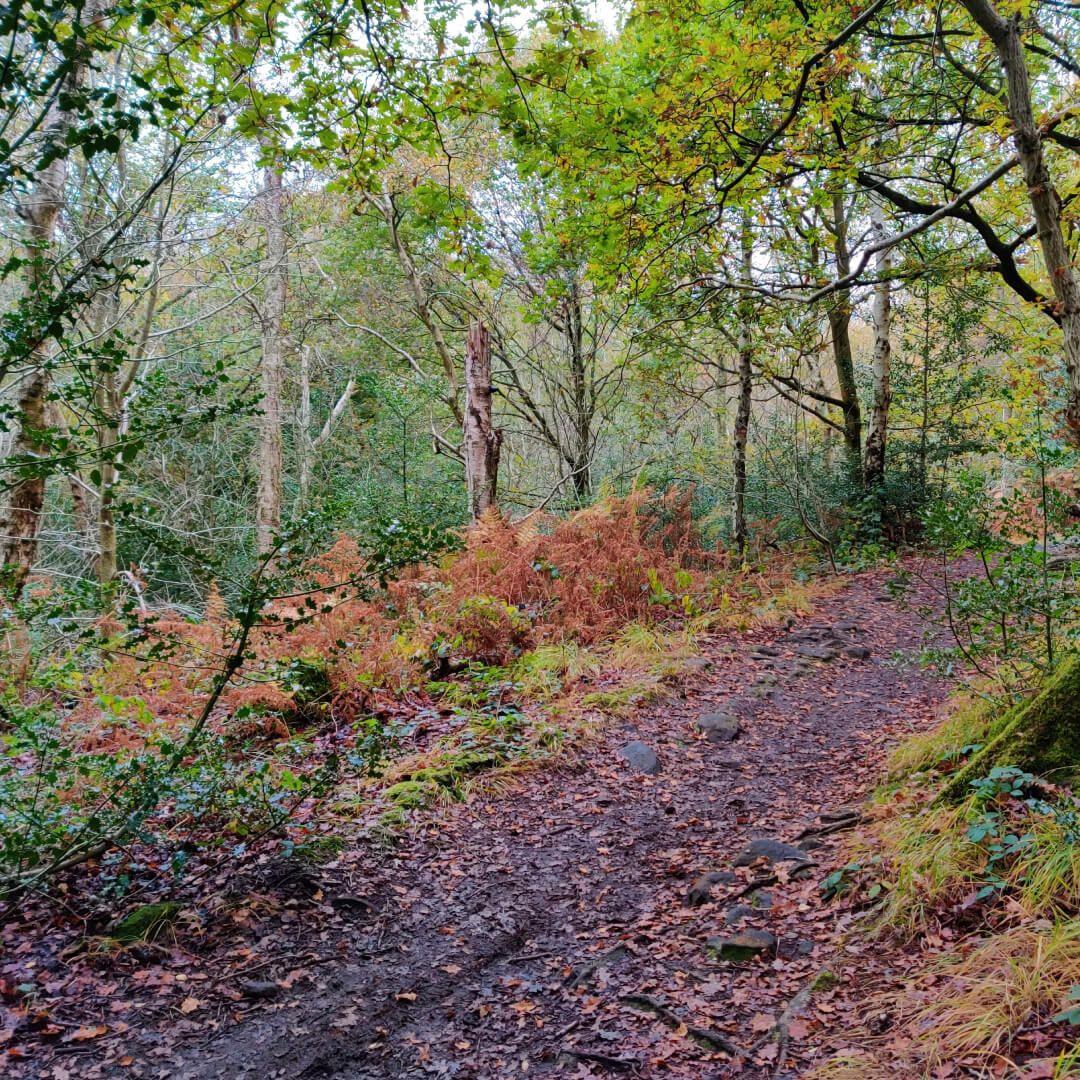Adel Woods muddy path