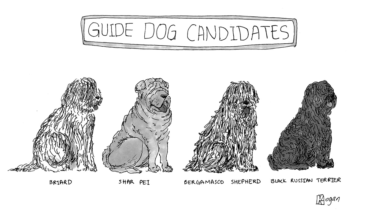Guide Dog Candidates