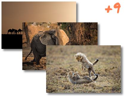Africa theme pack