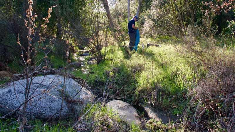 Tengo at Hauser Creek