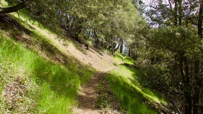 Trail on side of Sawmill Mountain