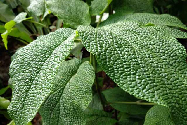 Magic Green - Singapore Botanic Gardens