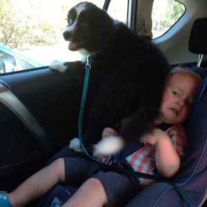 Dog and kid fighting over window seat