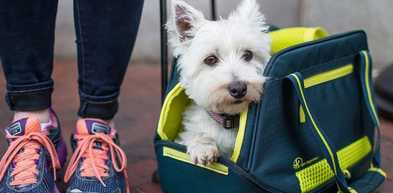 What to Know Before Flying with Your Dog