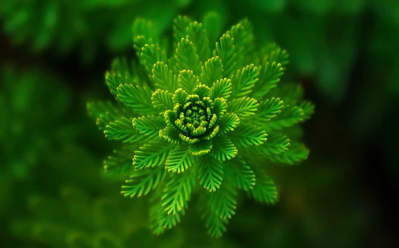 symmetric-fern