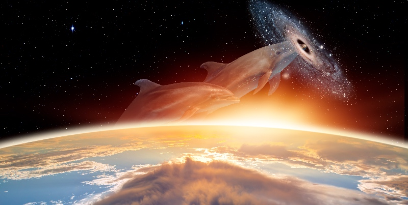 Dolphin Nebula - Mystical Source of DevOps Passion
