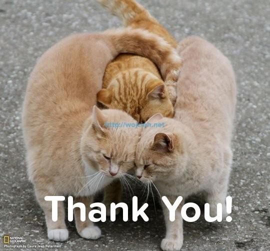 Group Hug Thanks