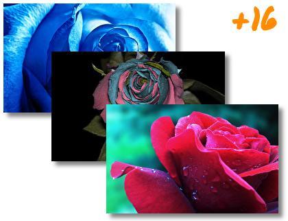 Rose theme pack