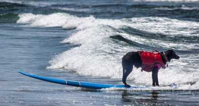 San Diego Dog Beaches!