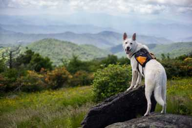 5 Things To Know Before Hiking With Your Dog