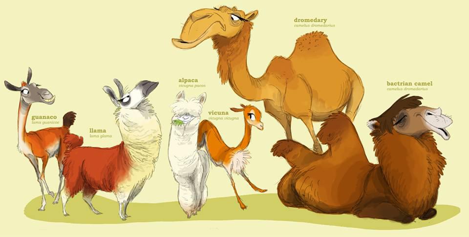 camelib family