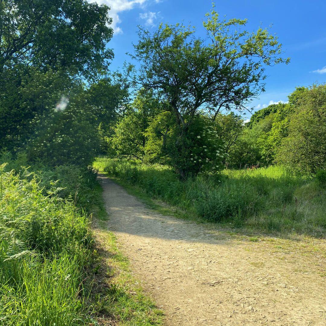 Breary Marsh walk