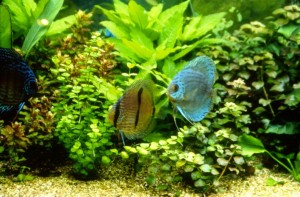 The Planted Aquarium: A Guide to Plants