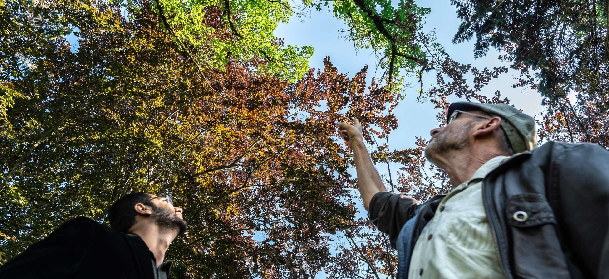 People look at tree canopies in their neighbourhood to learn how they can mitigate climate change