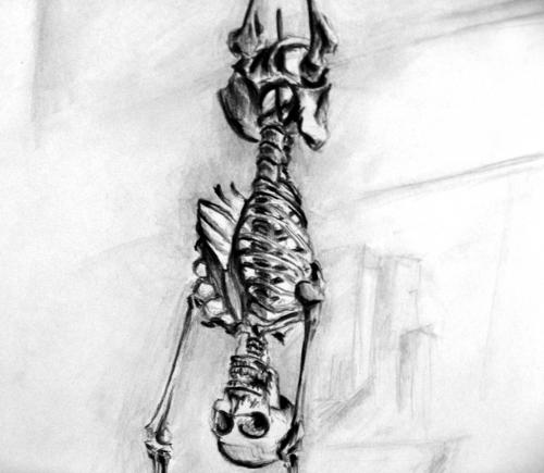 Skeleton Hanging Sketch