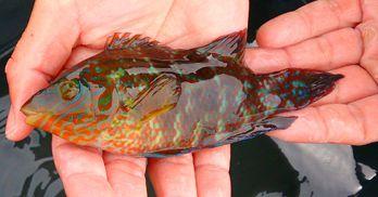 Balestrand Family & Fish-nett