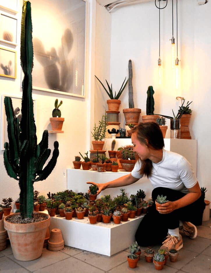Kaktus Kbh og Billy Regnskabsprogram