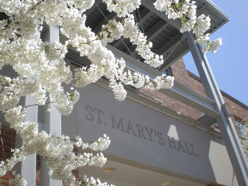 Cherry blossoms in bloom at the entrance to St. Mary's Hall at Georgetown University
