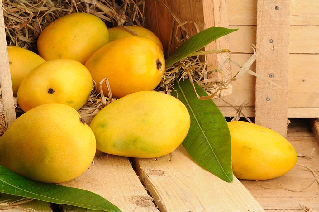 Mango orchards cover roughly 33% of the total area under fruit cultivation in India making it abundant fruit in the country.