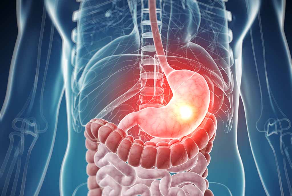 Why doesn't our stomach get digested?