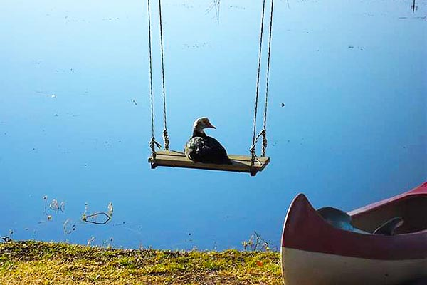 A duck sitting on the swing near to the dam.