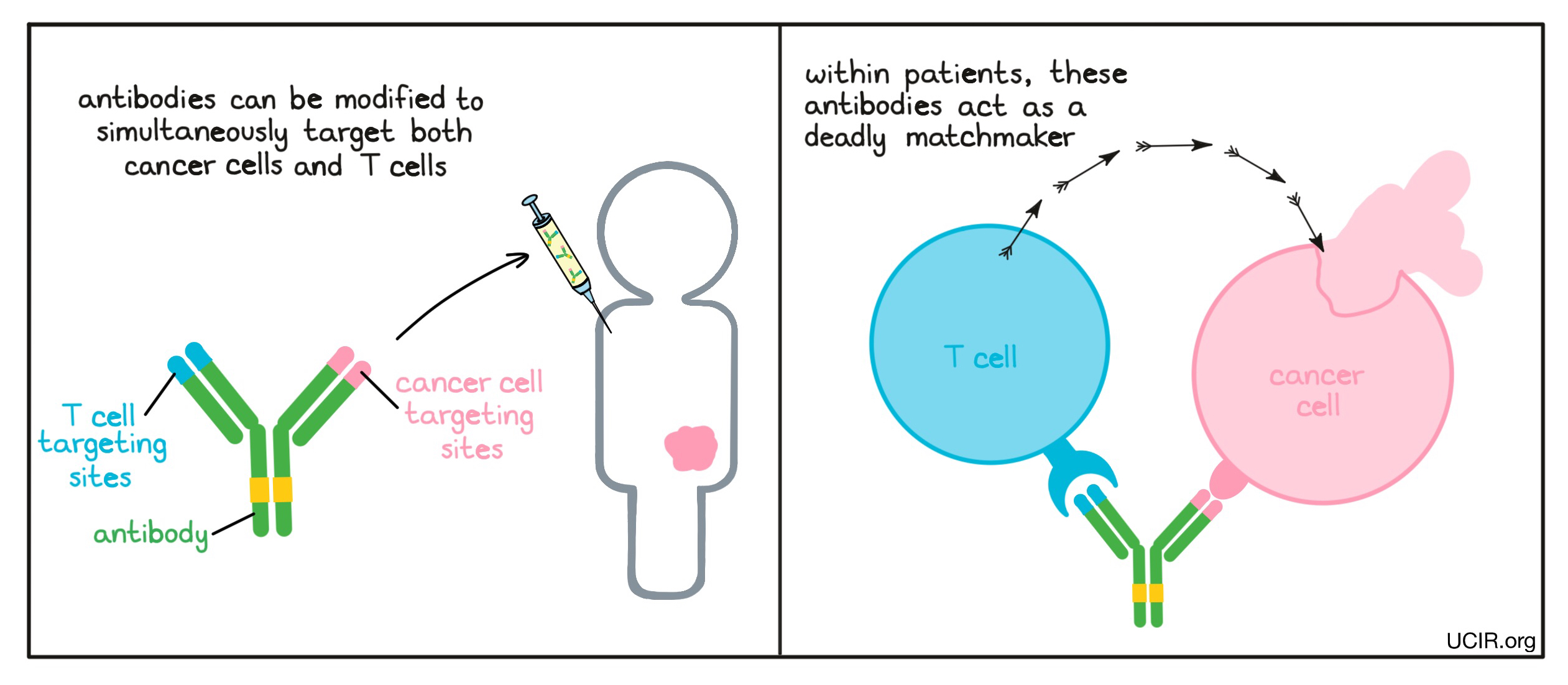 Illustration of bispecific antibody
