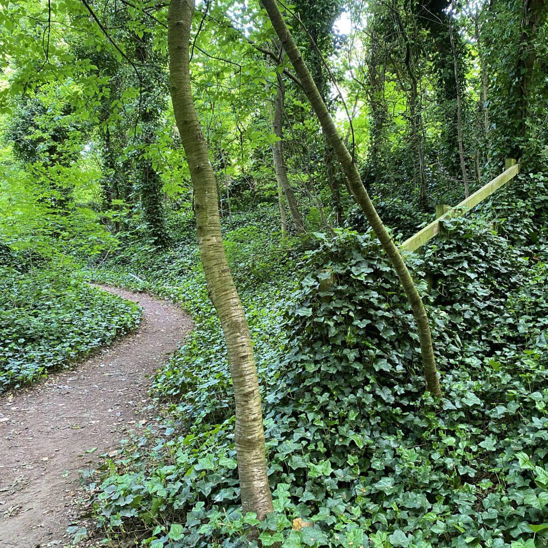 Kirkstall Abbey Path