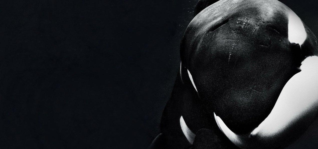 Blackfish/