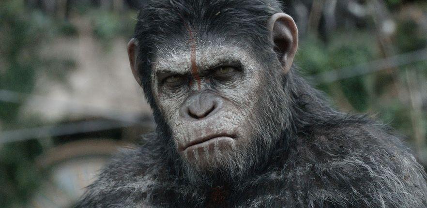 Caesar looks grumpy