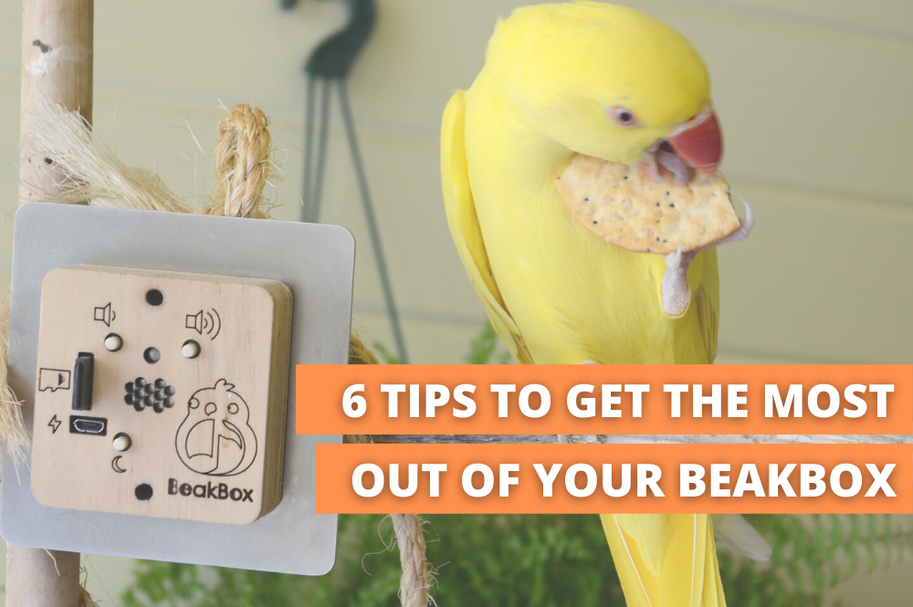 Yellow bird eating a cracker