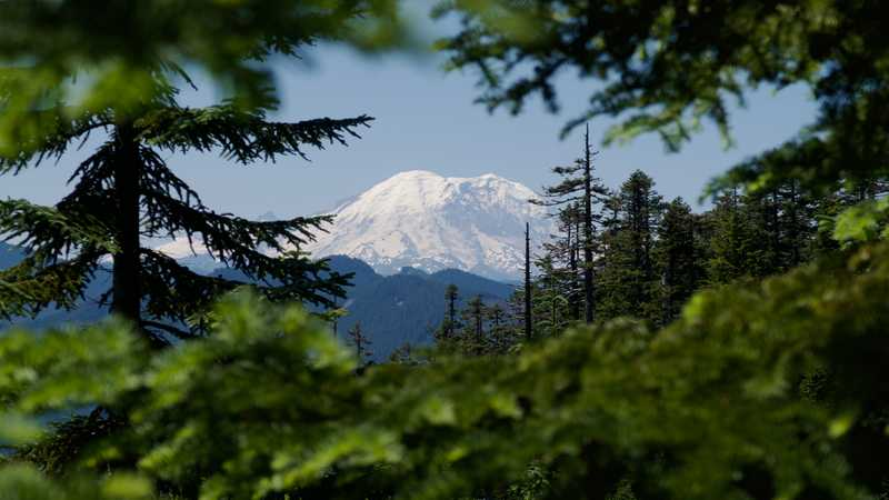 A view of Mount Rainier through an opening in trees