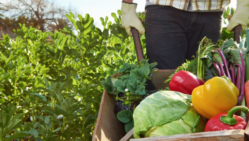 Imagem em destaque para o artigo: A agricultura sustentável como alternativa