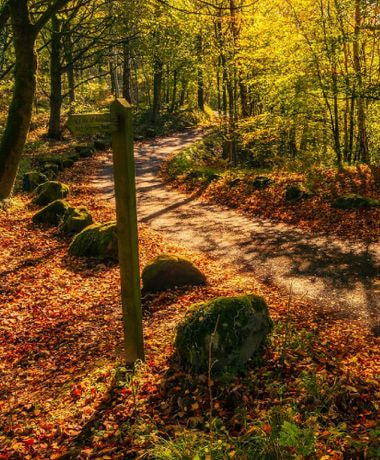 Bolton Abbey trail in Autumn with golden leaves