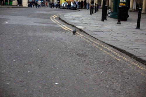 Pigeon 0764
