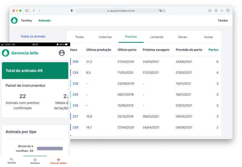 Imagem do dashboard