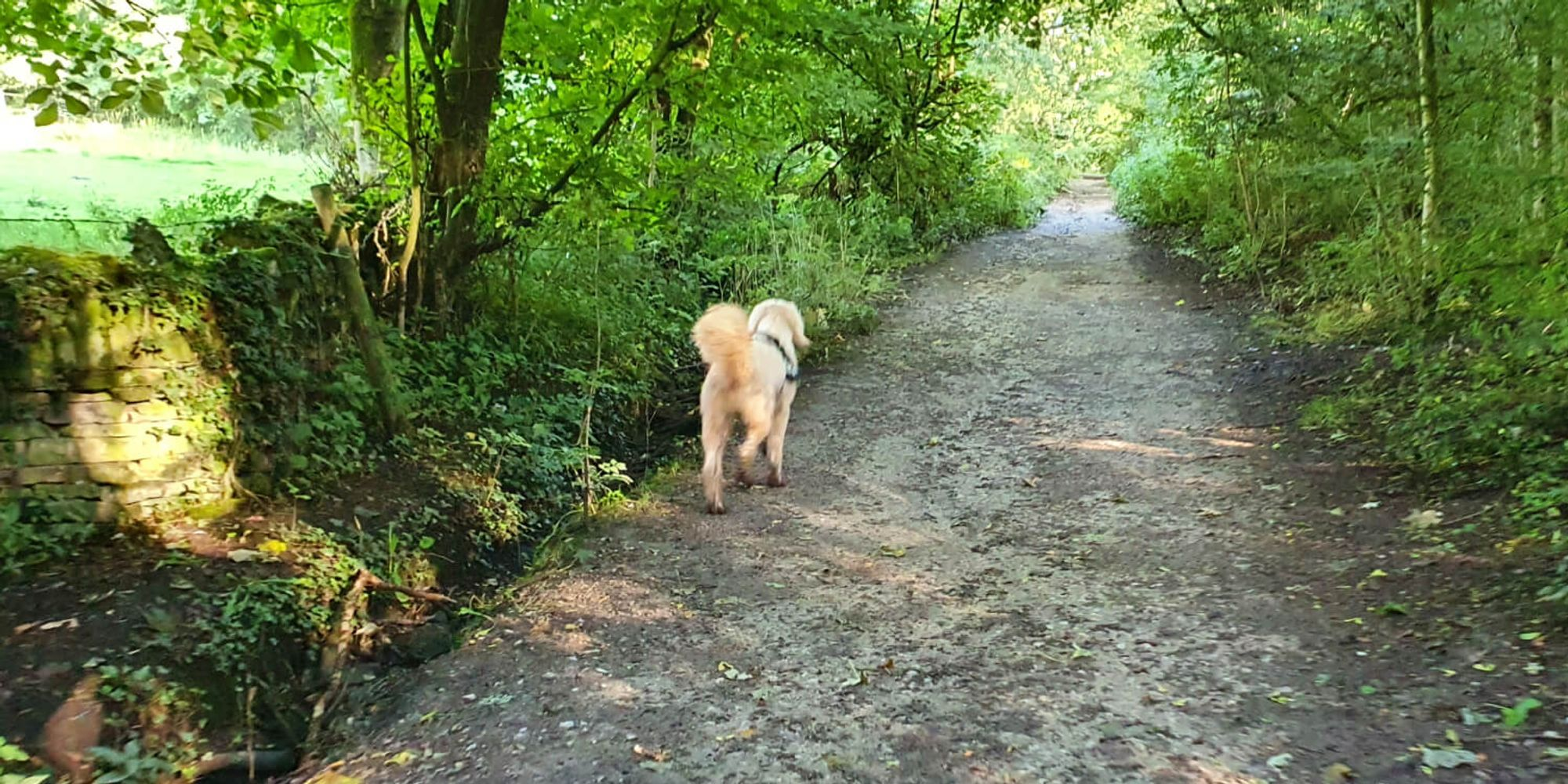 muddy path surrounded by trees with a dog to the left