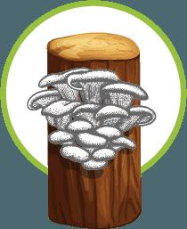 Mushroom fruiting