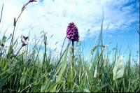 A Fragrant Orchid against the sky