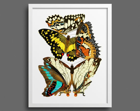 Papillons by EA Seguy - plate 9