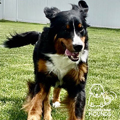 dog-22-hbh