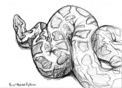 Python Sketch